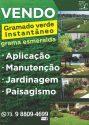 Gramado Verde Instantâneo Flora Nova Caraíva - Imagem2