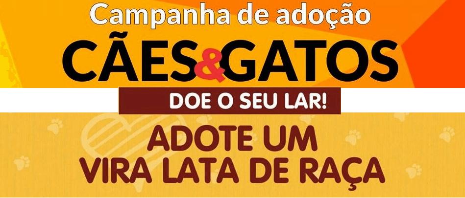 campanha de adoção em Porto Seguro cães e gatos doe o seu lar adote um vira lata de raça