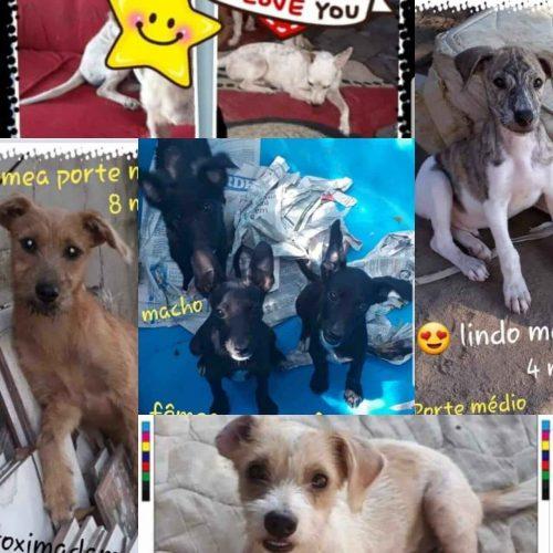 animais para adoção em Porto seguro cães adultos e filhotes