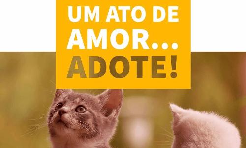 Filhotes de animais para adoção um ato de amor adote porto oferta porto seguro