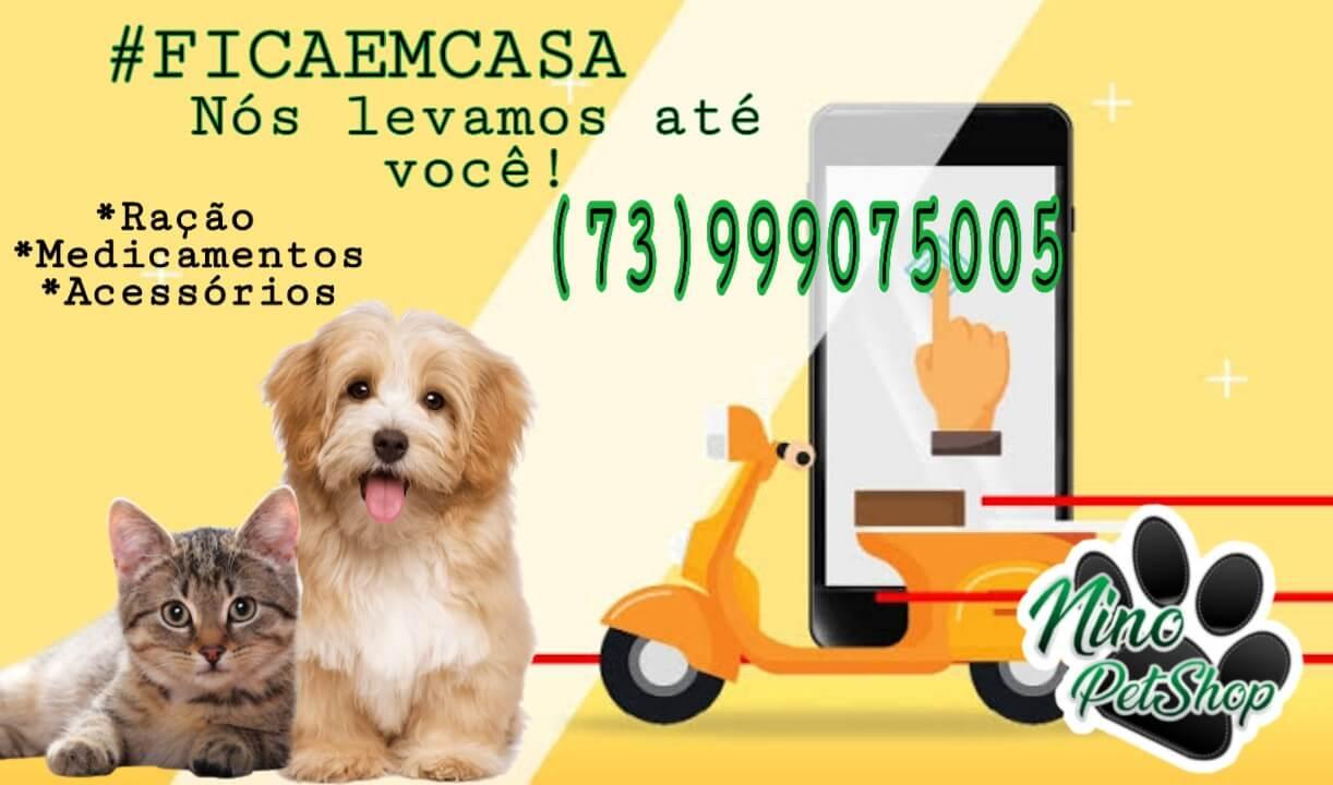 Gato cinza cão caramelo peludo nino pet shop porto seguro entrega grátis