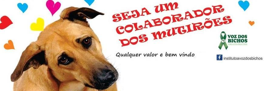banner seja um colaborador dos mutirões voz dos bichos adoção e doações em Porto Seguro