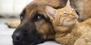 Cão e gato cor caramelo para adoção em Porto Seguro