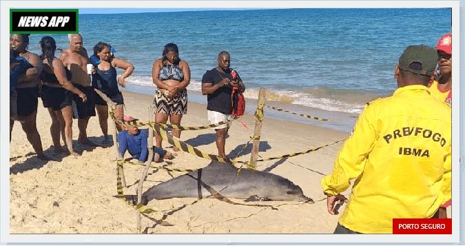 Golfino morto em praia noticias de porto seguro